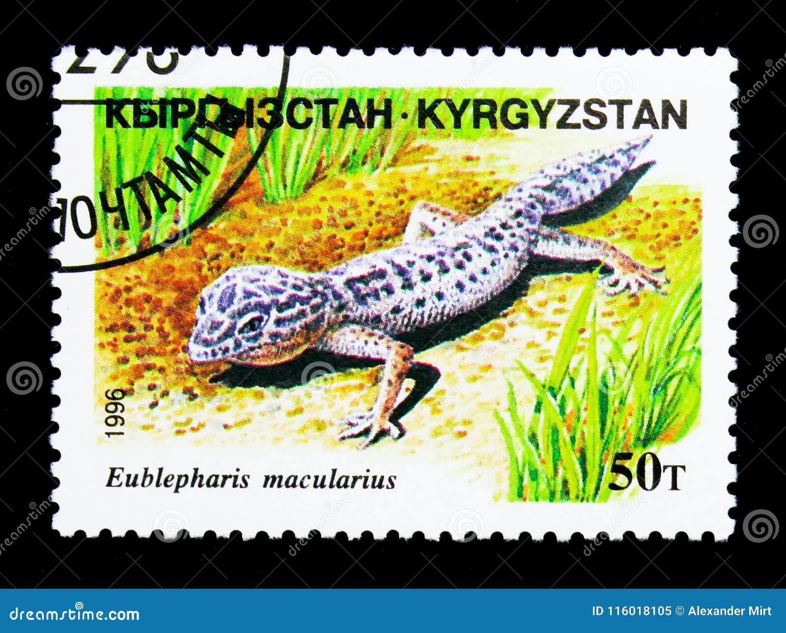 Gecko de léopard (macularius d Eublepharis), serie de reptiles, vers 19