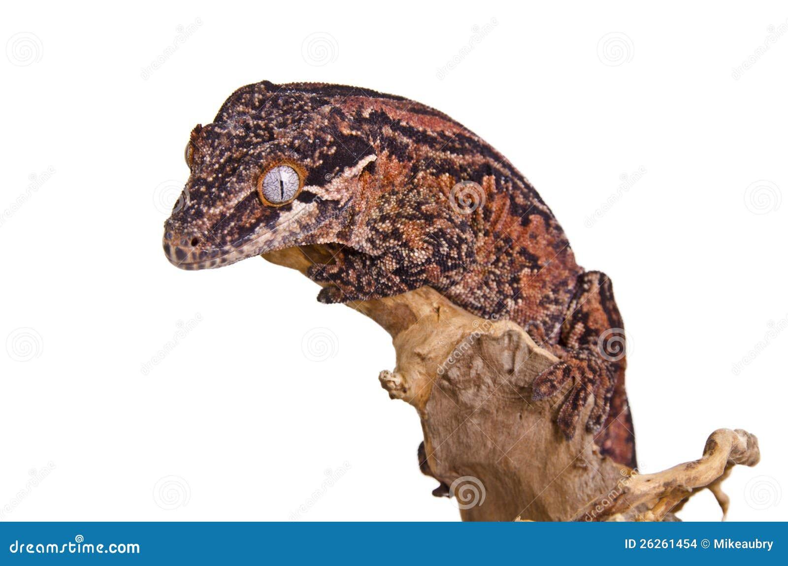 Gecko Gargoyle