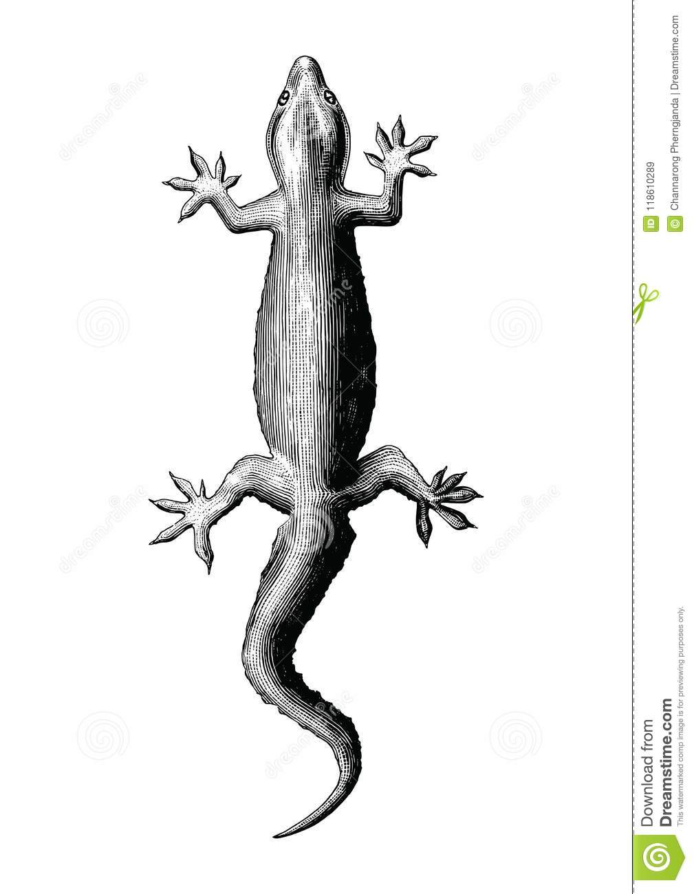 52db696f5 Gecko Hand Drawing Vintage Style Stock Vector - Illustration of clip ...