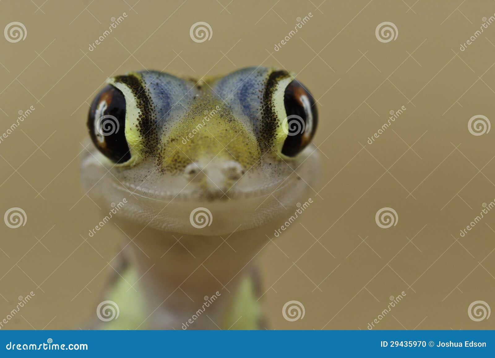 Gecko heureux