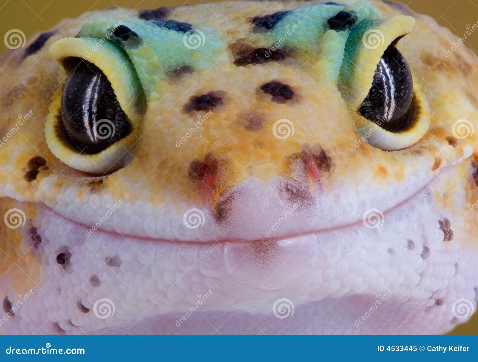 Gecko-Lächeln