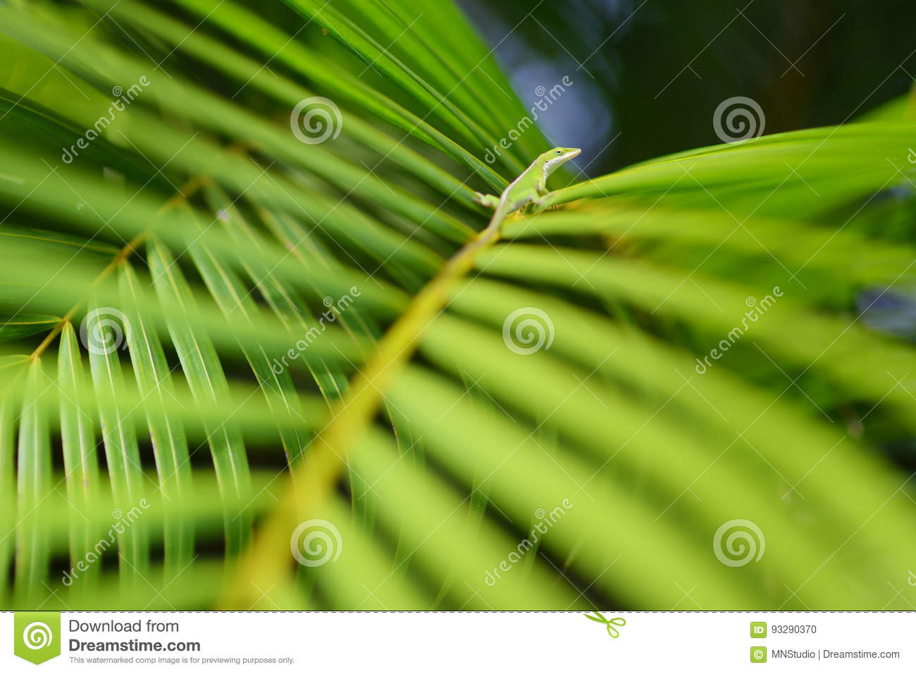 Gecko relaxing on green tropical leaf