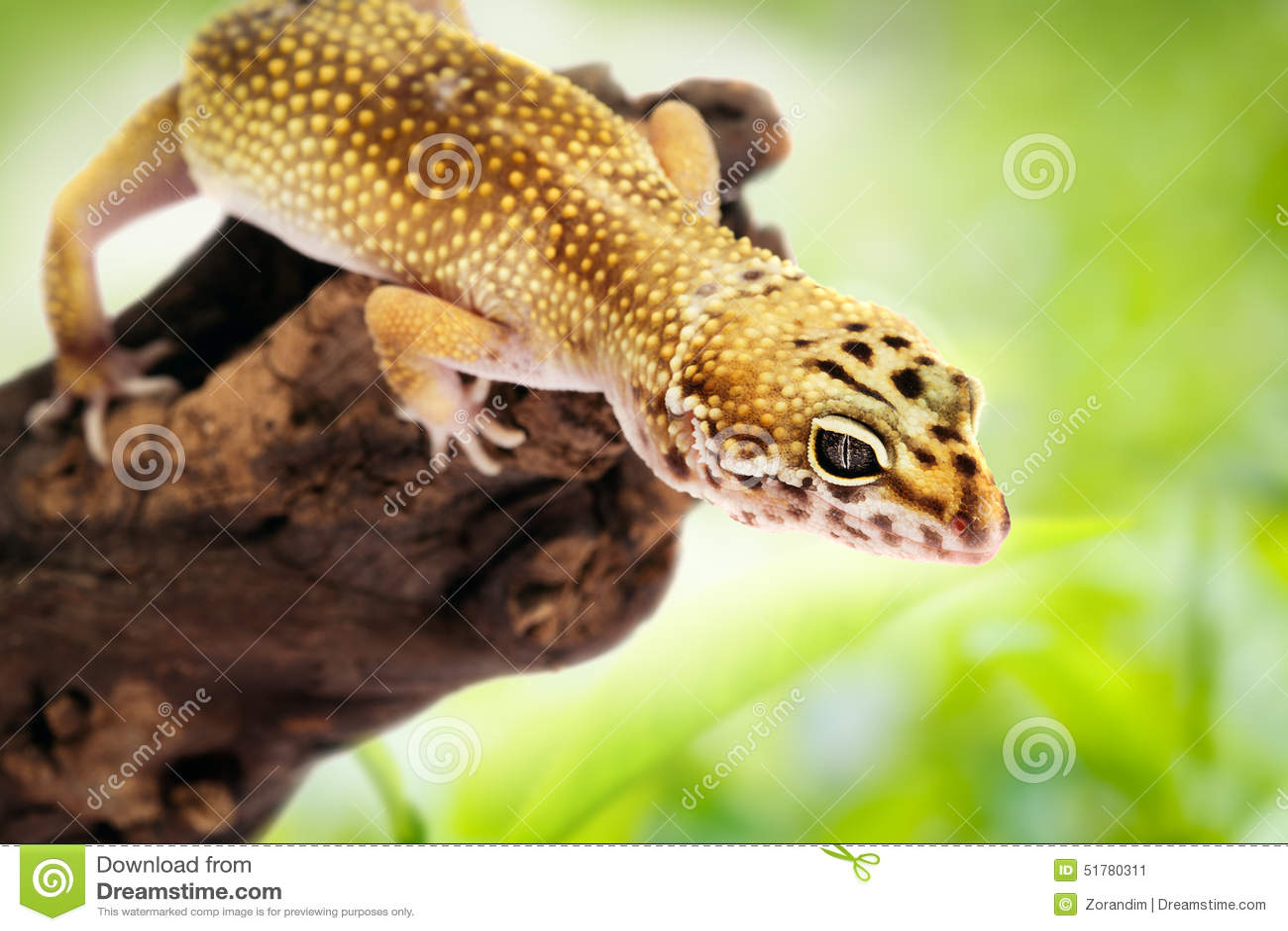 Gecko se reposant sur une branche
