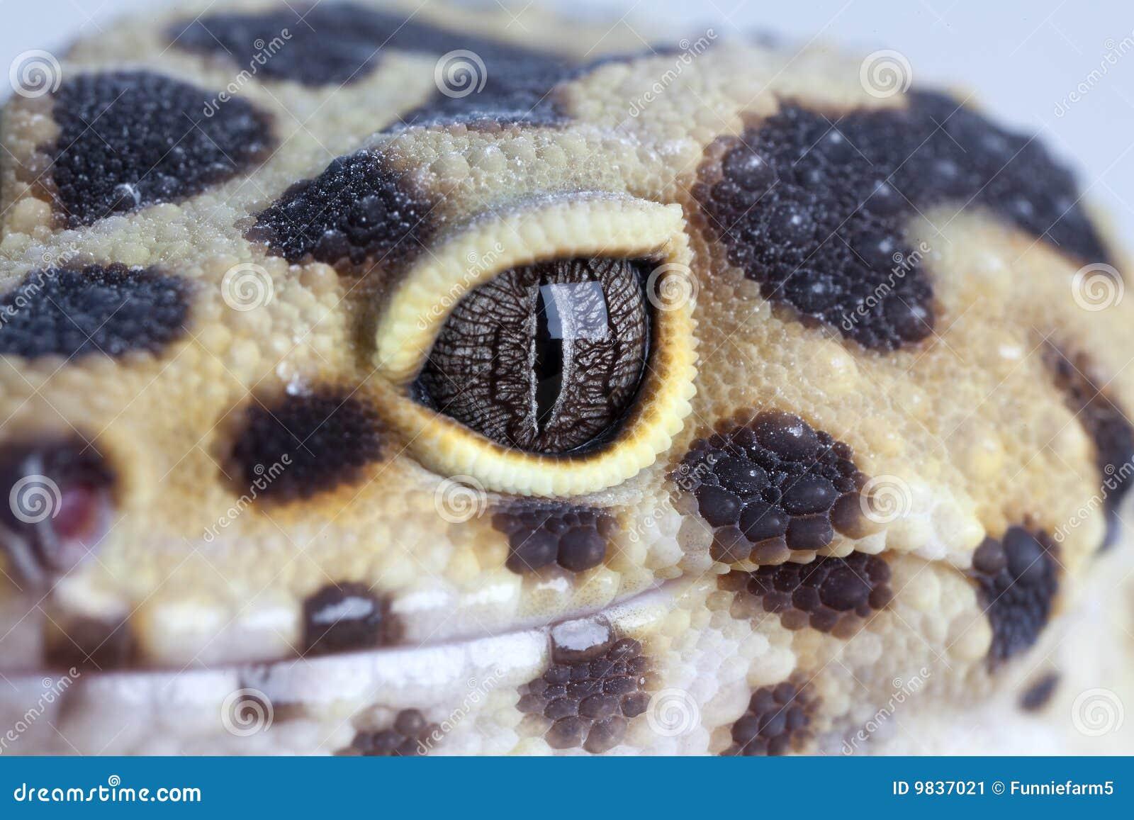 Geckosleende