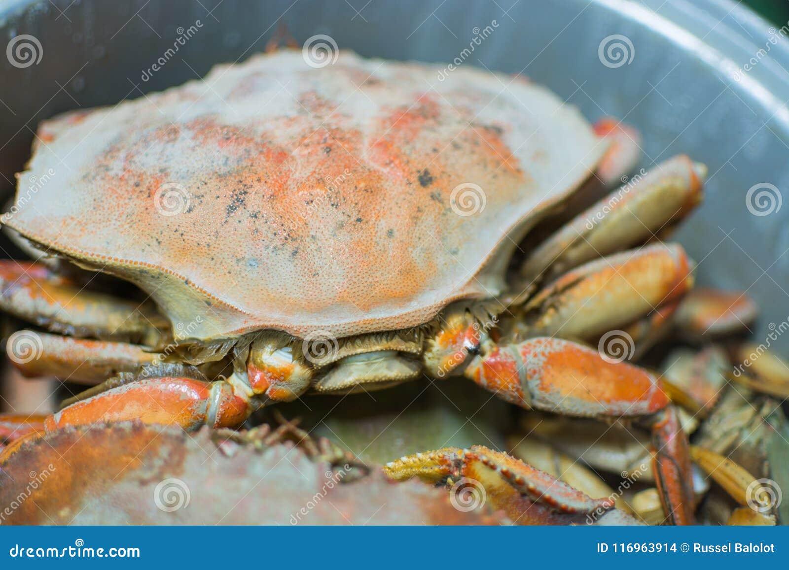 Gedämpfte Krabben
