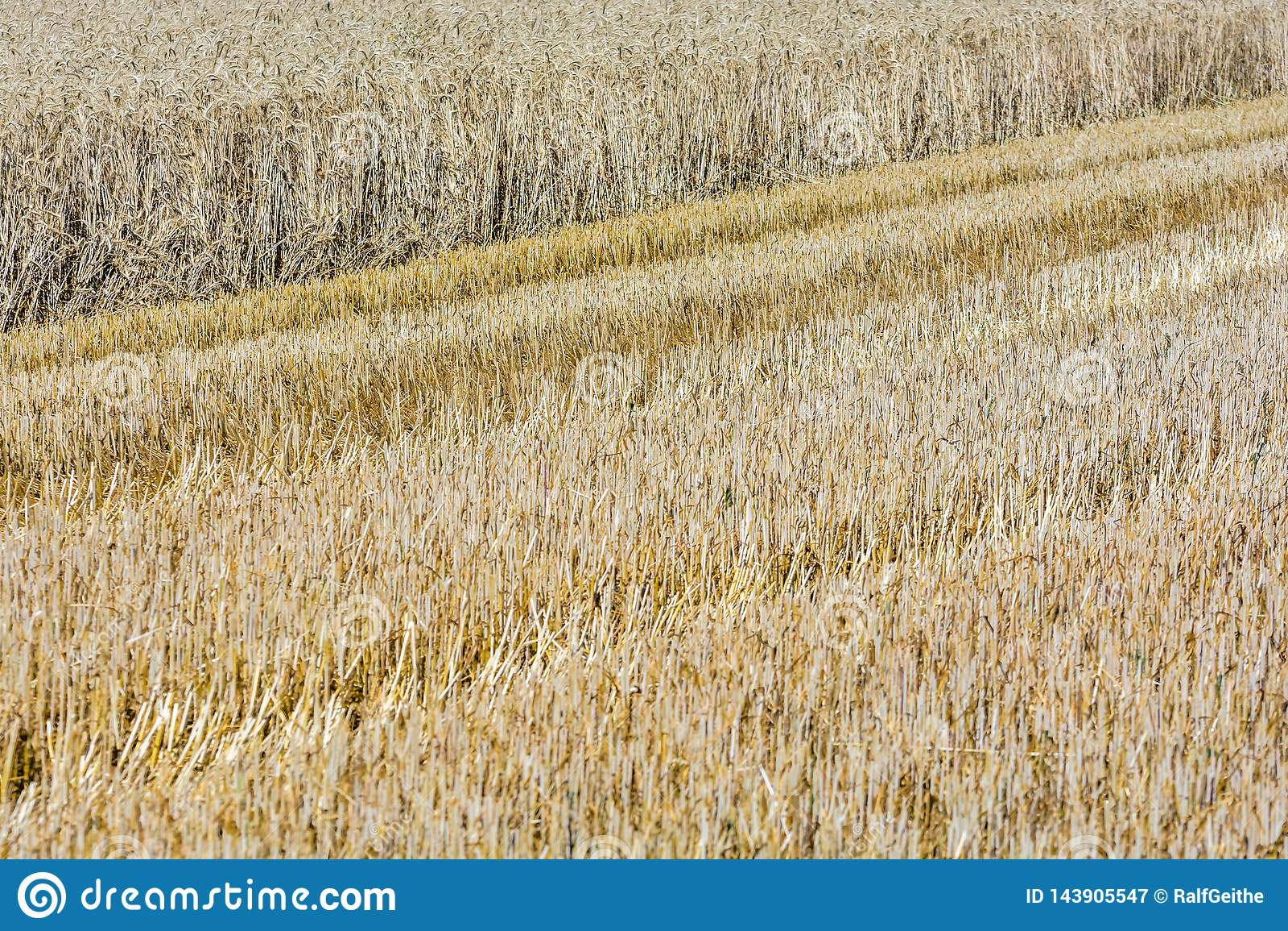 Gedeeltelijk geoogst graangewassengebied