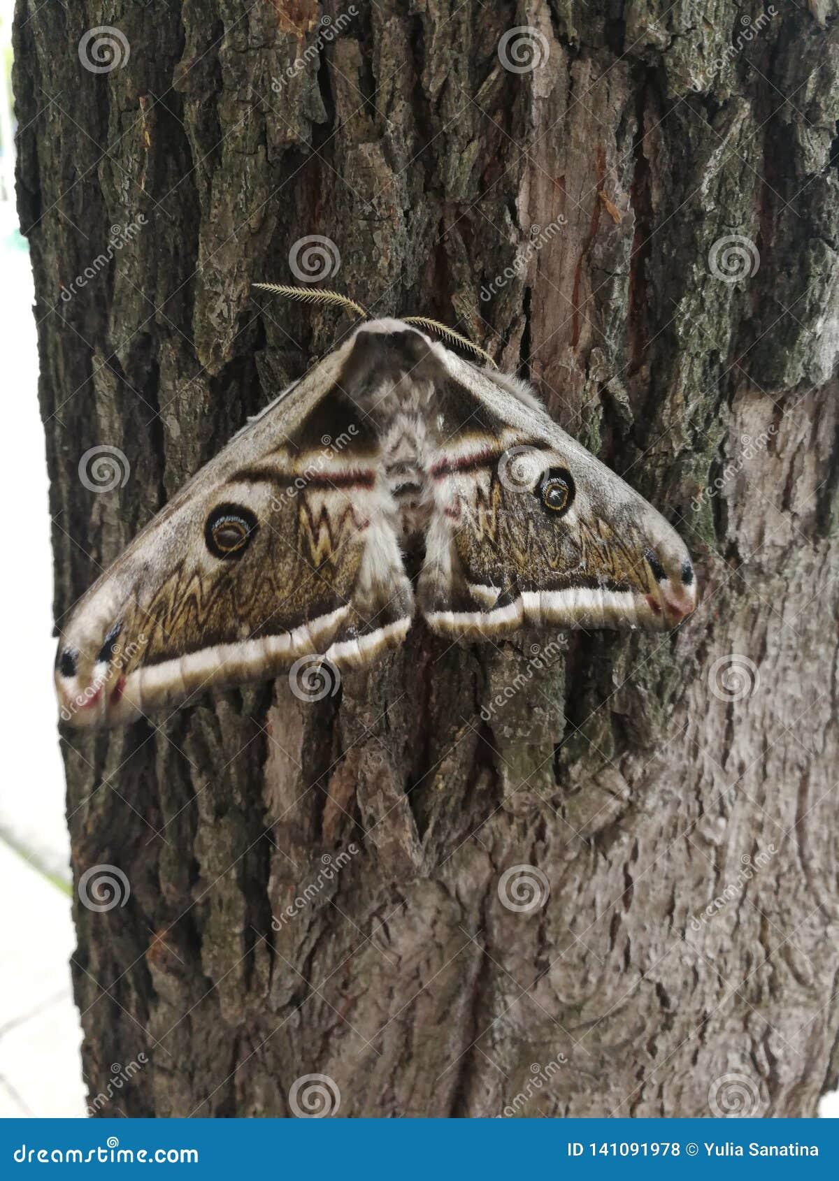 Gedetailleerd beeld van de houten grote nachtmot