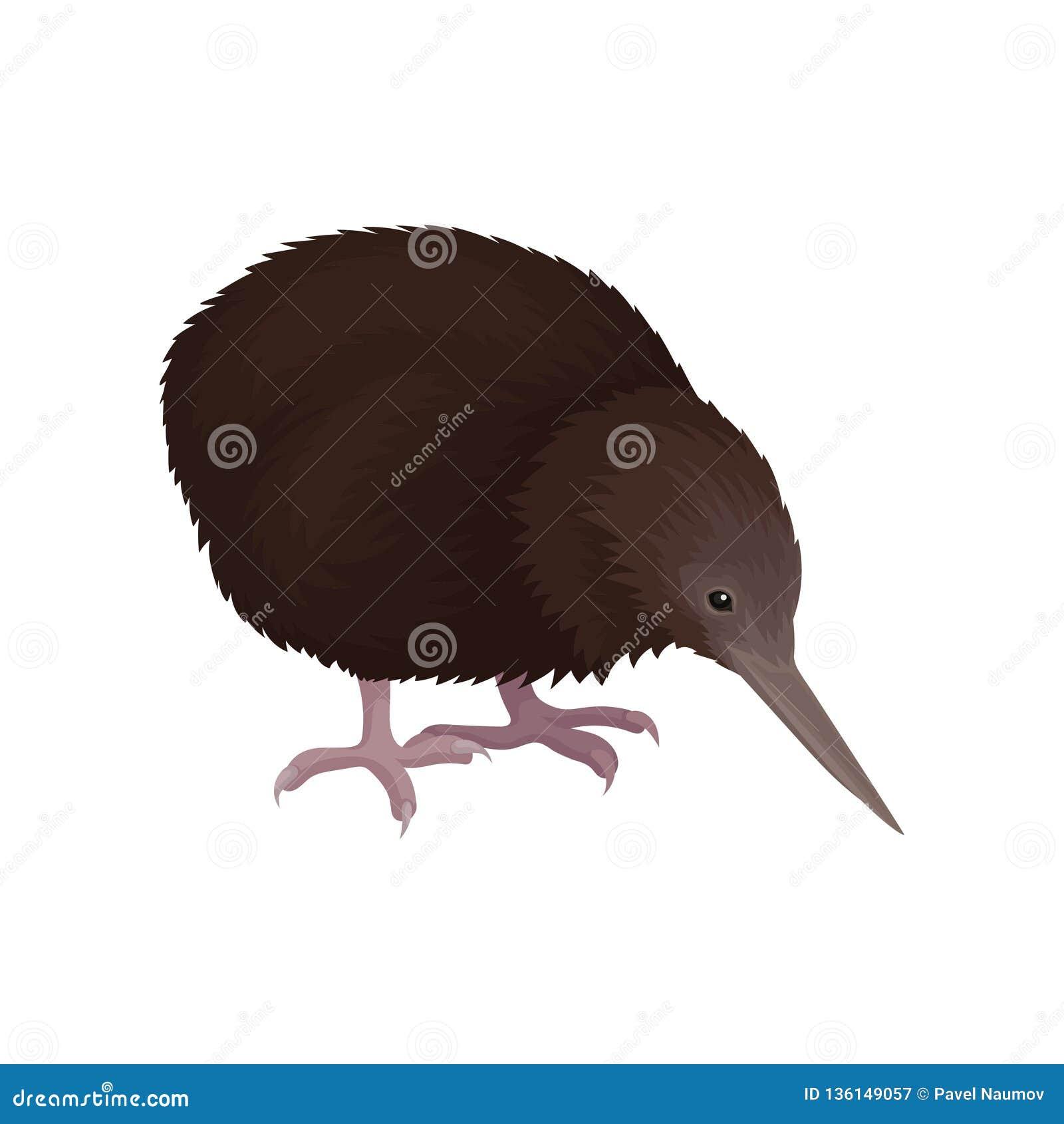 Gedetailleerd vlak vectorpictogram van kiwivogel Wild Australisch dier met lange bek, bruine veren en korte benen wildlife