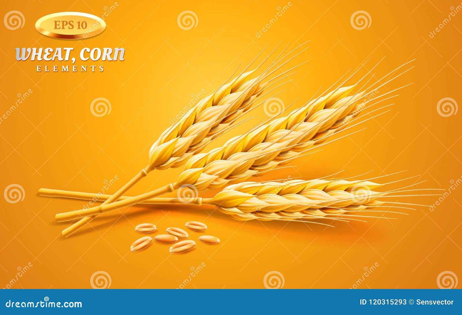 Gedetailleerde die tarweoren, haver of gerst op een gele achtergrond worden geïsoleerd Natuurlijk ingrediëntenelement Gezond voed