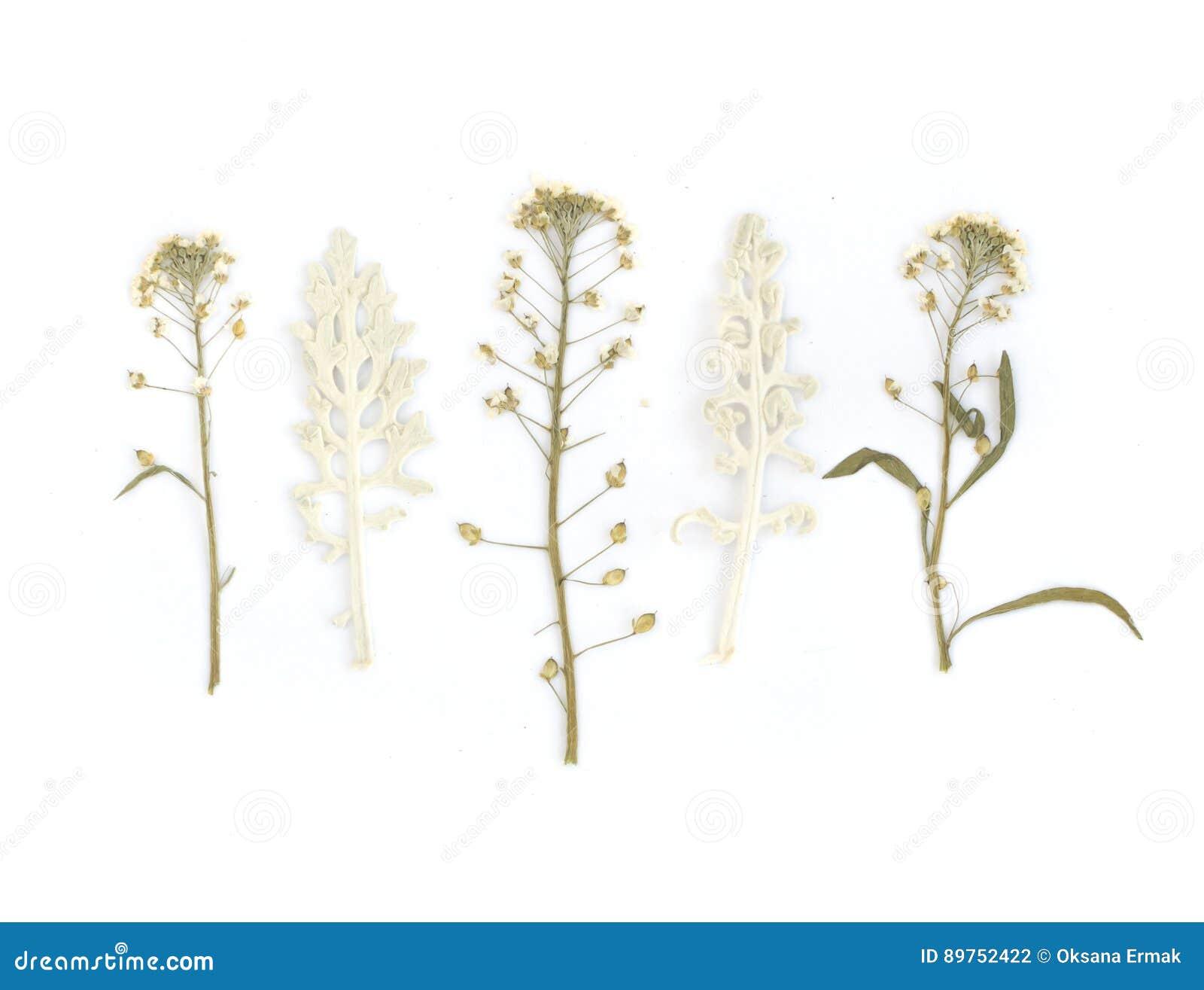 Gedrukt Droog Herbarium van Diverse Installaties