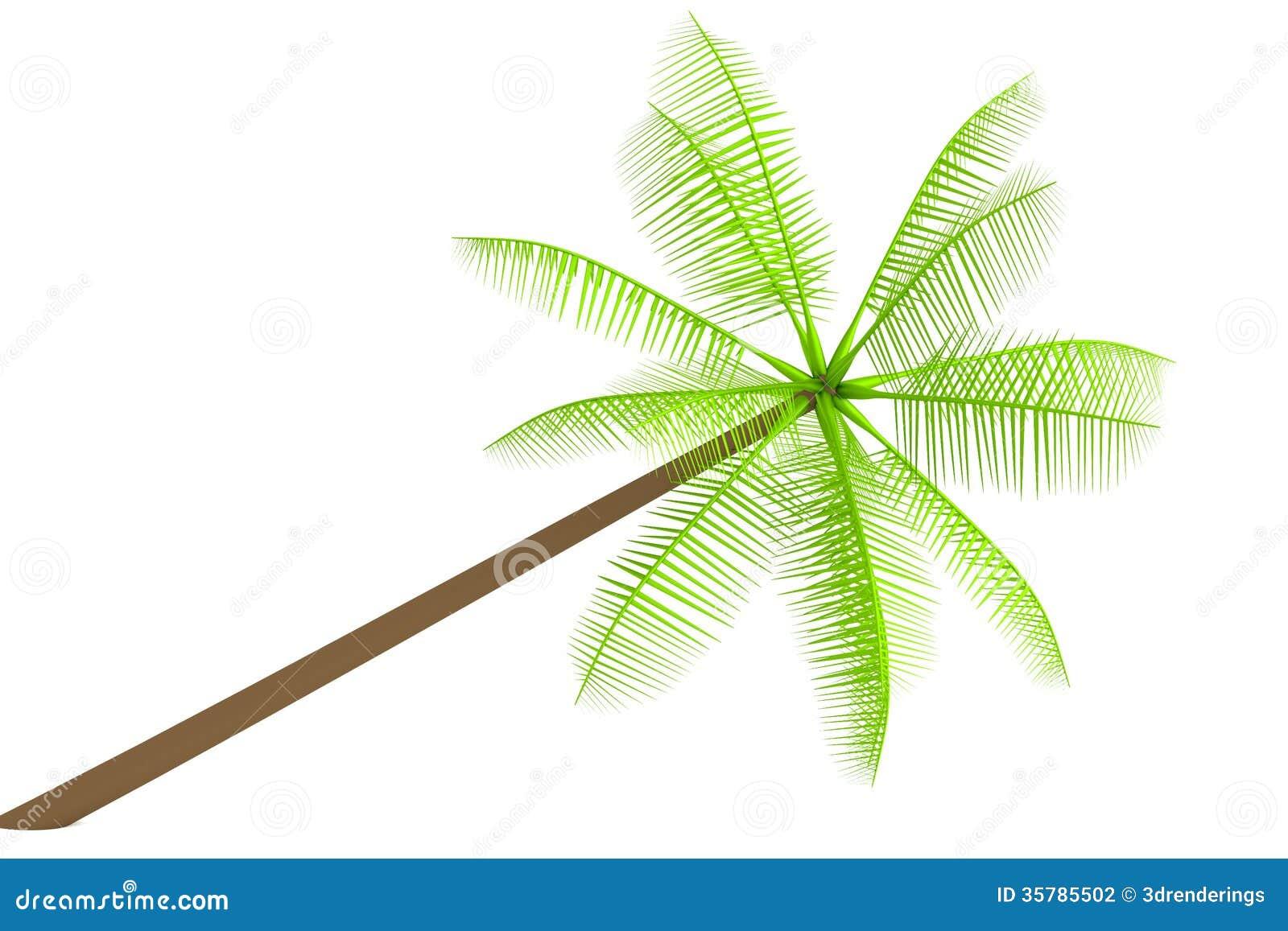 Geef van palm terug