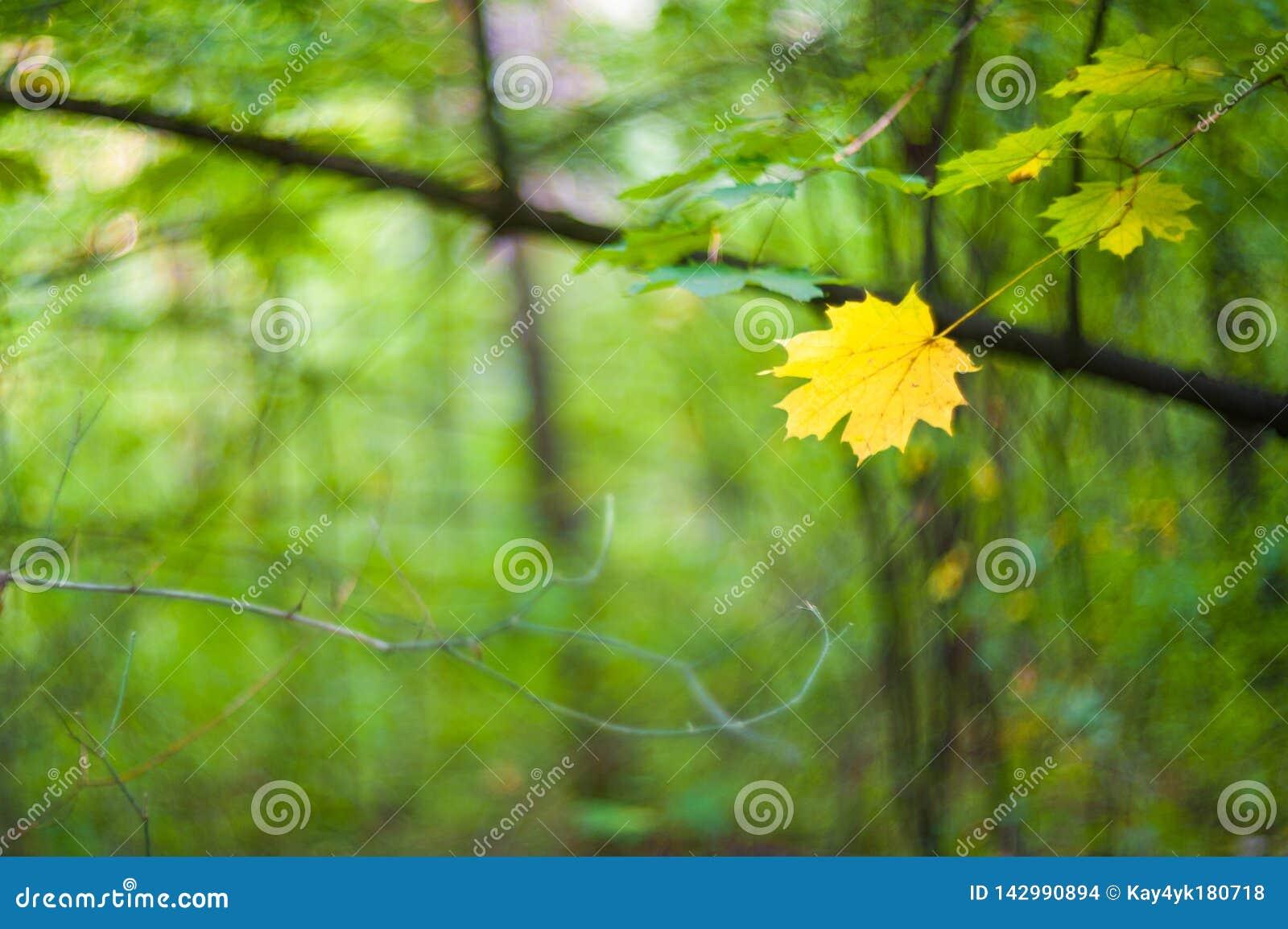Geel esdoornblad op een groene achtergrond, enig blad