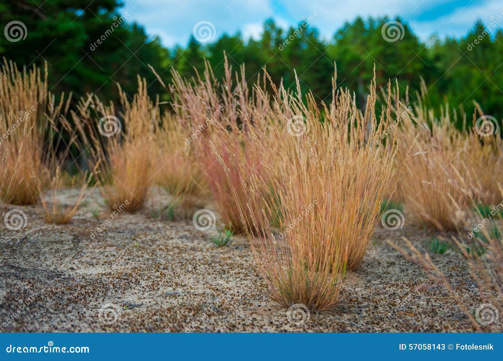 Geel gras in het zand