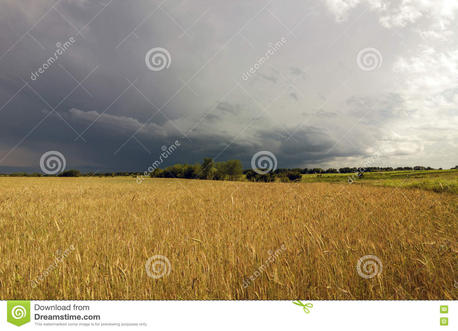Geel tarwegebied en stormachtige wolken