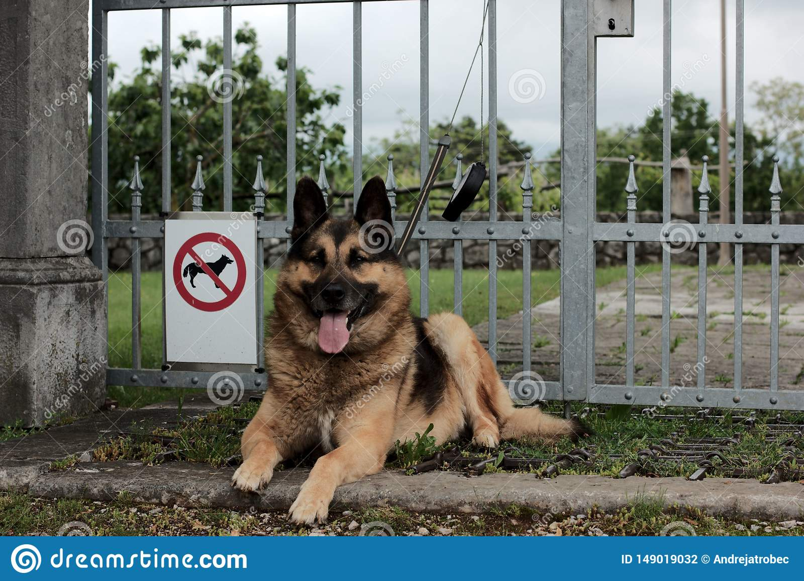 Geen toegestane honden