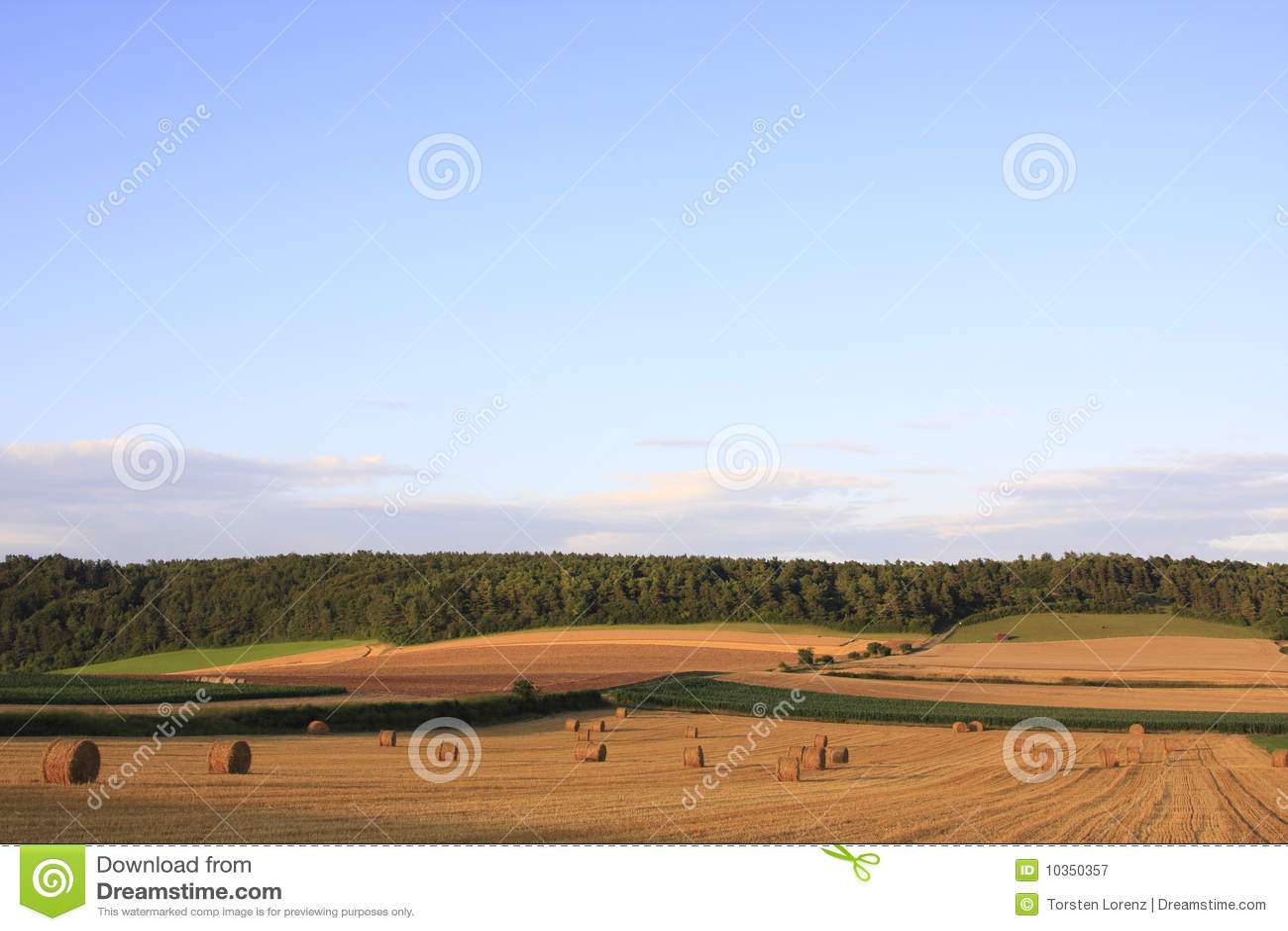 Geerntetes Feld