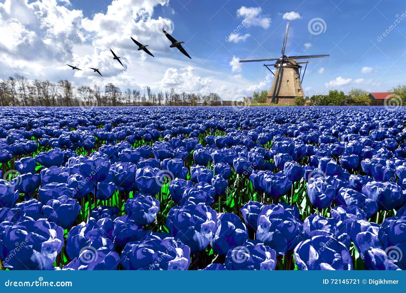 geese flying over endless blue tulip farm stock photo farm animal clipart for teachers farm animal clipart for teachers