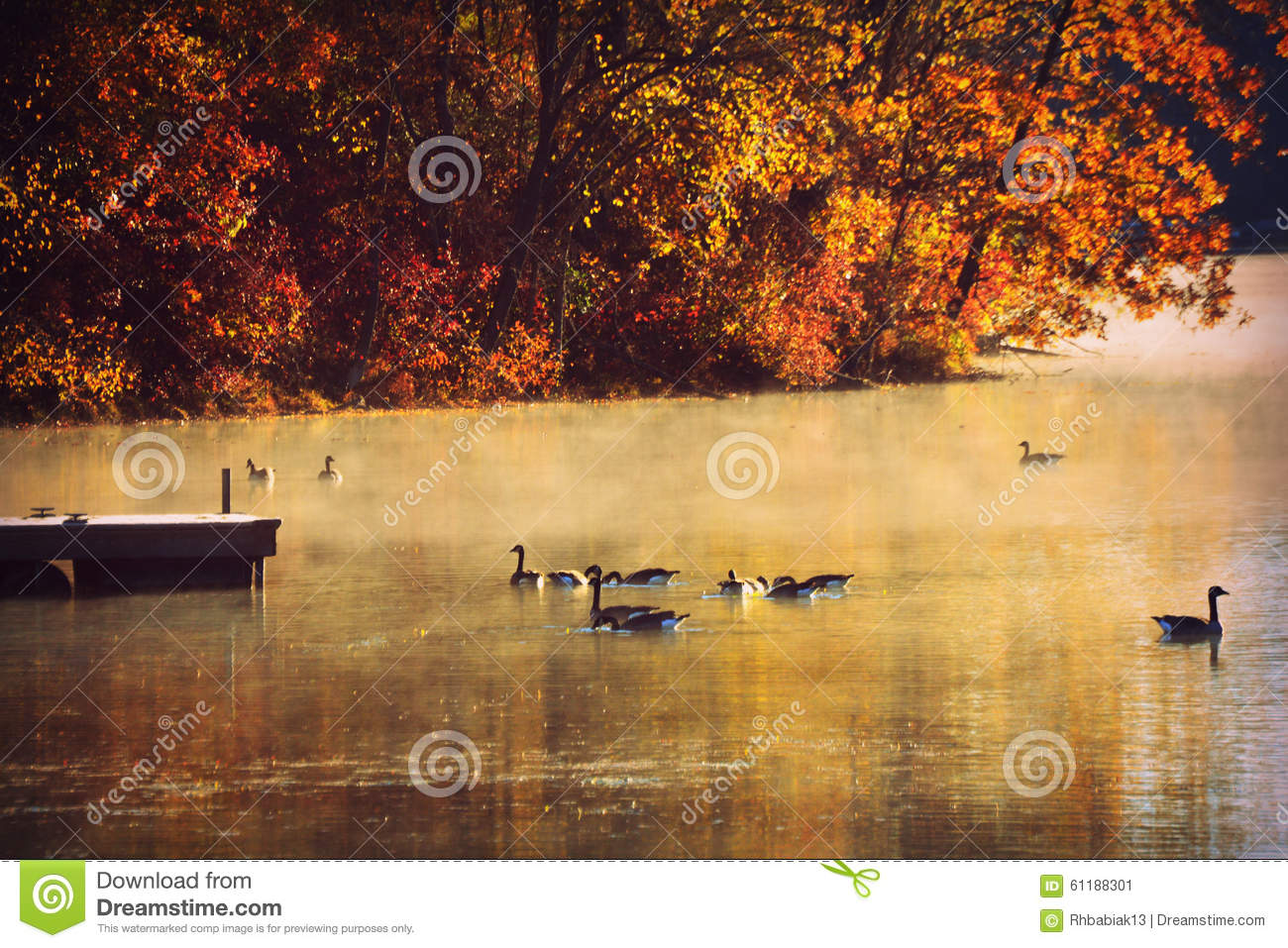 Geese on Lake, Morning Mist, Fall