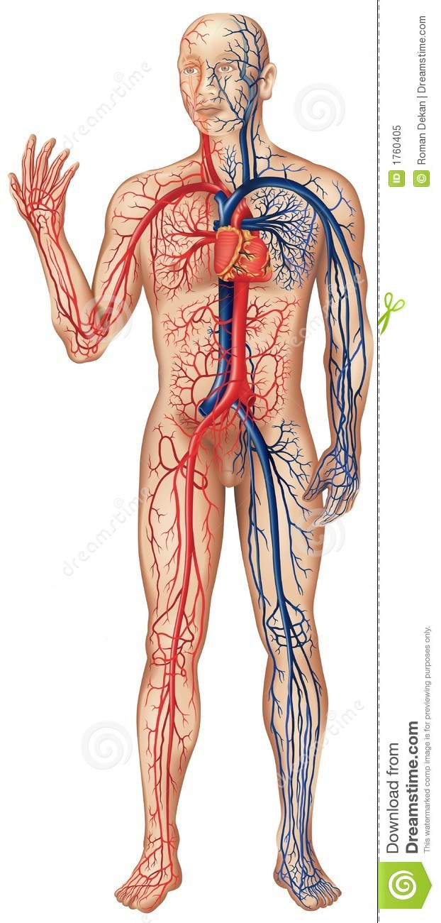 atlas of human anatomy the bones muscles vessels and nerves of the human body organs of sense eye ear nose and tongue res piratory apparatus genito urinary organs of the male and female