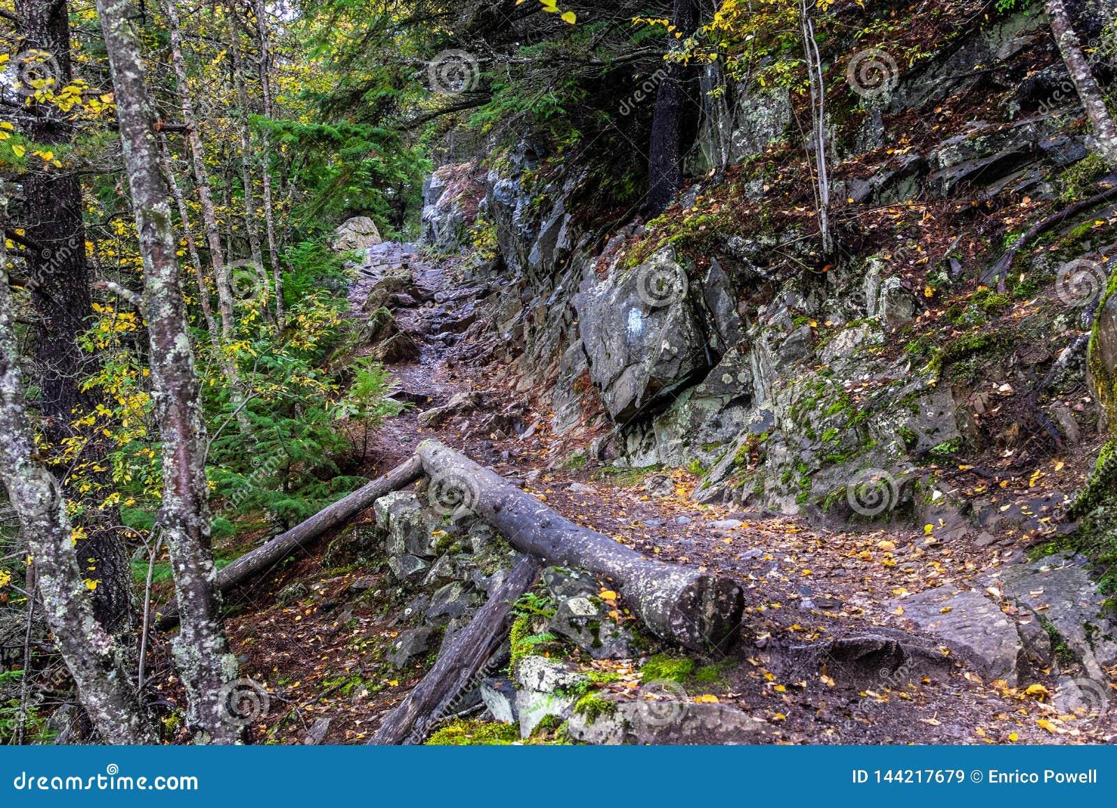 Gefallene Baumstämme und -herbst färbten leaved entlang einem wandernden trai