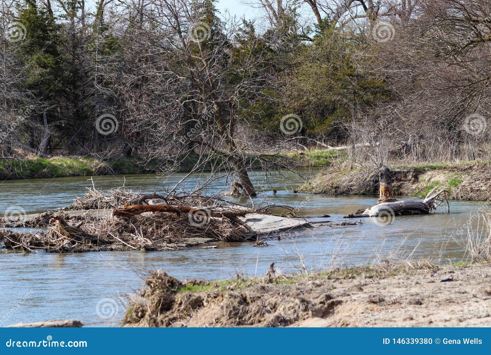 Gefallener Baum im Platte River Nebraska