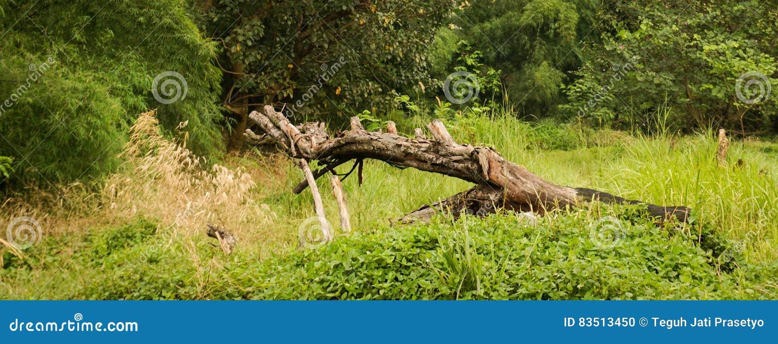 gefallener toter baum mitten in grassyard foto. Black Bedroom Furniture Sets. Home Design Ideas