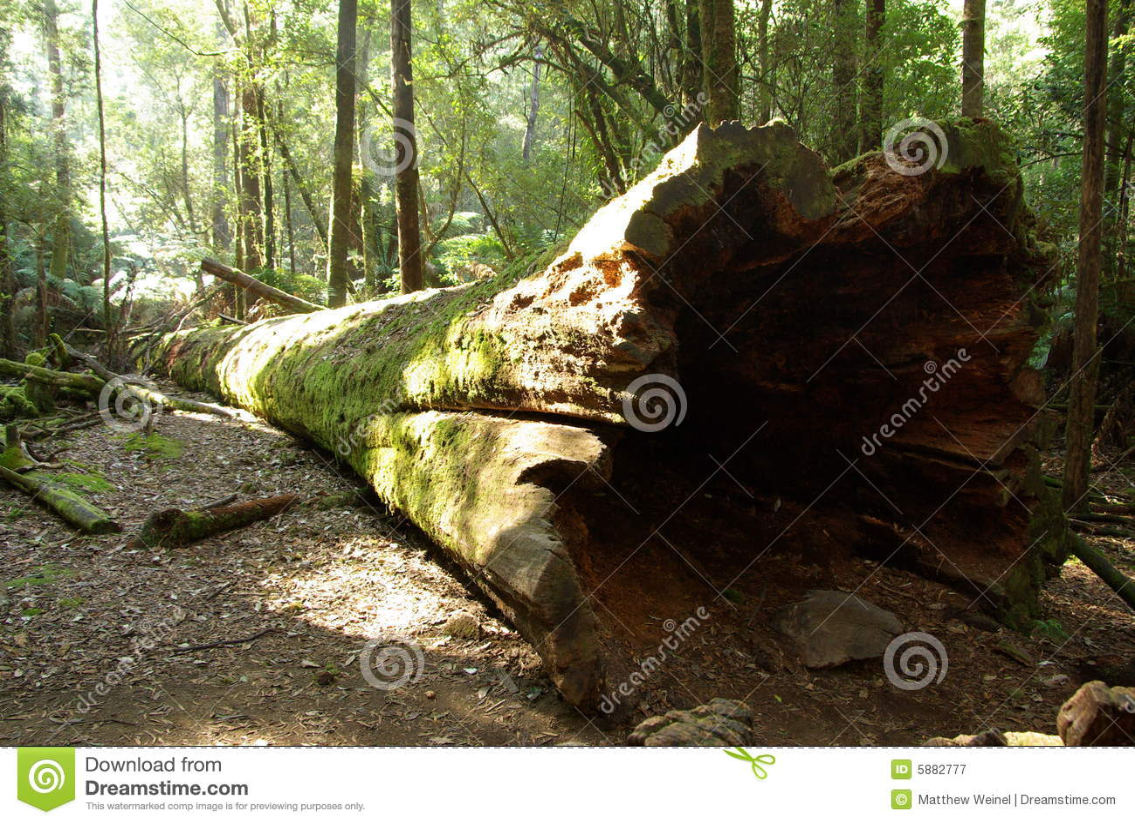 Gefallenes Baum-Kabel