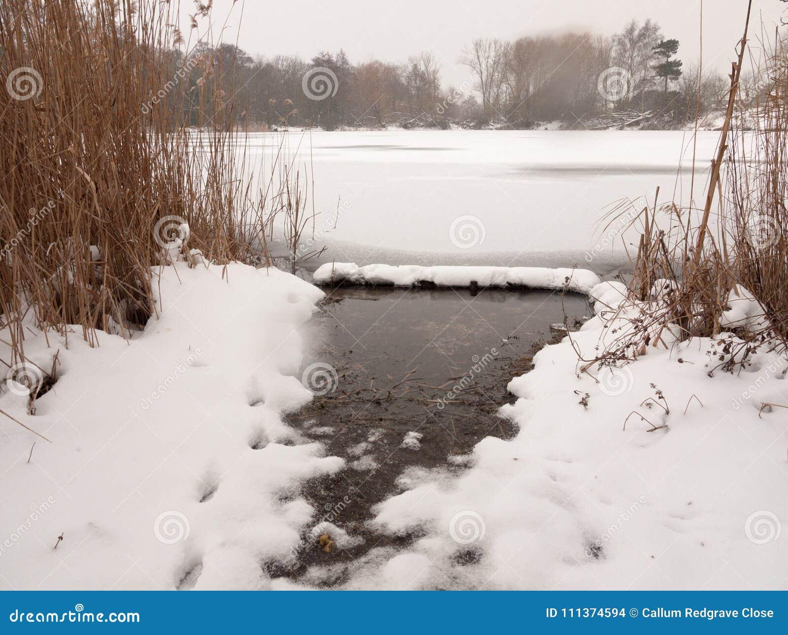 Gefrorene Seeoberflächenwinter-Schneebäume deckt Wasser mit Schilf