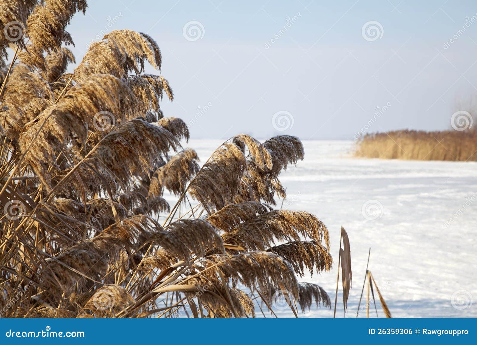 Gefrorener Stock im Winter