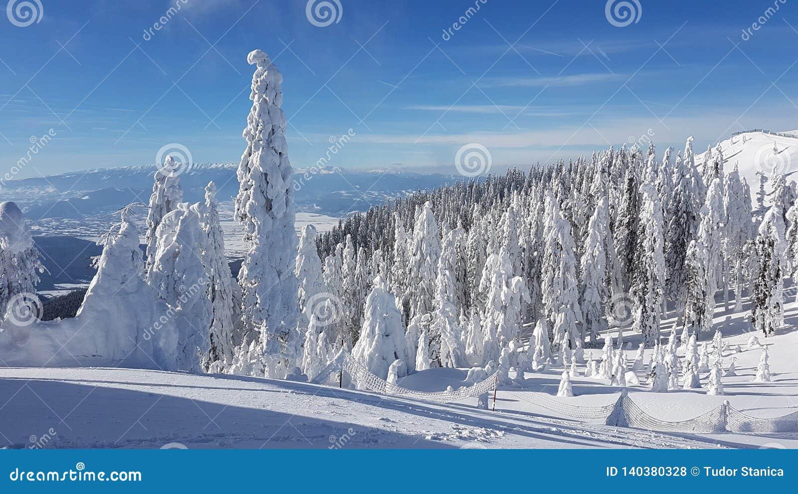Gefrorener Tannen-Wald in den montains