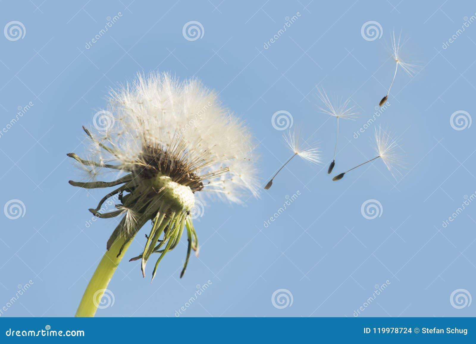 Gegaan met de wind