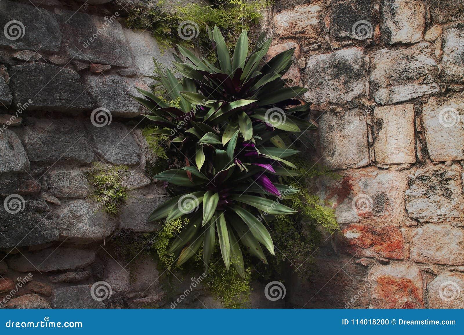 Gegroeid op de muren
