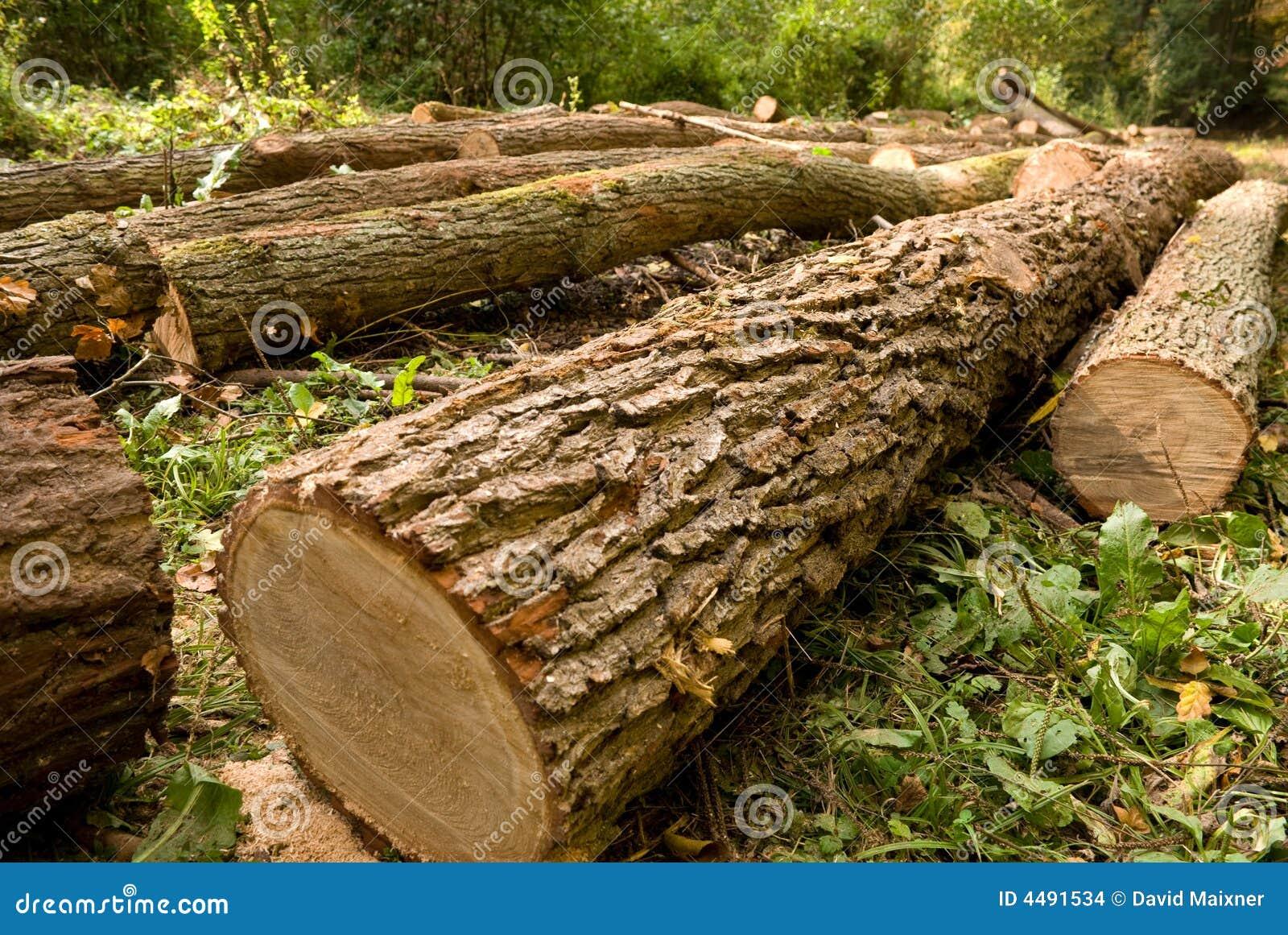 Gehackte Bäume