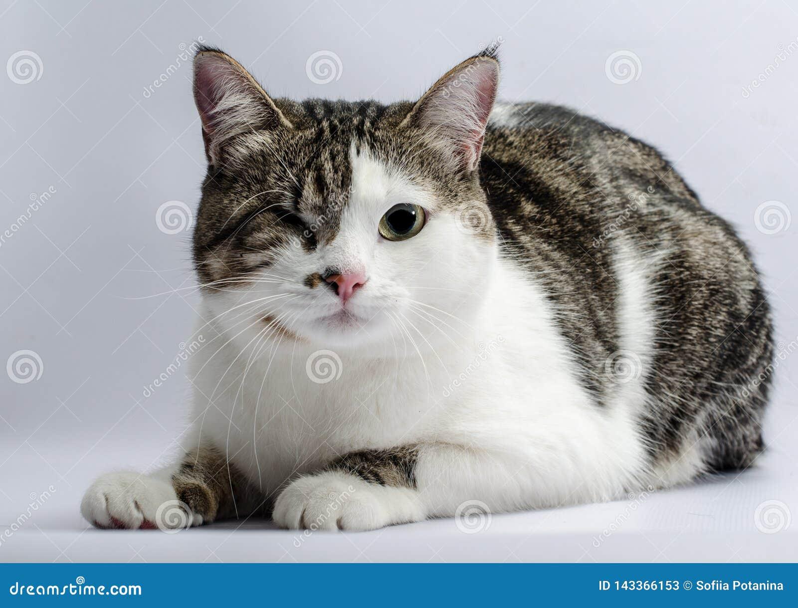 Gehandicapt dierenportret van een eenogige kat