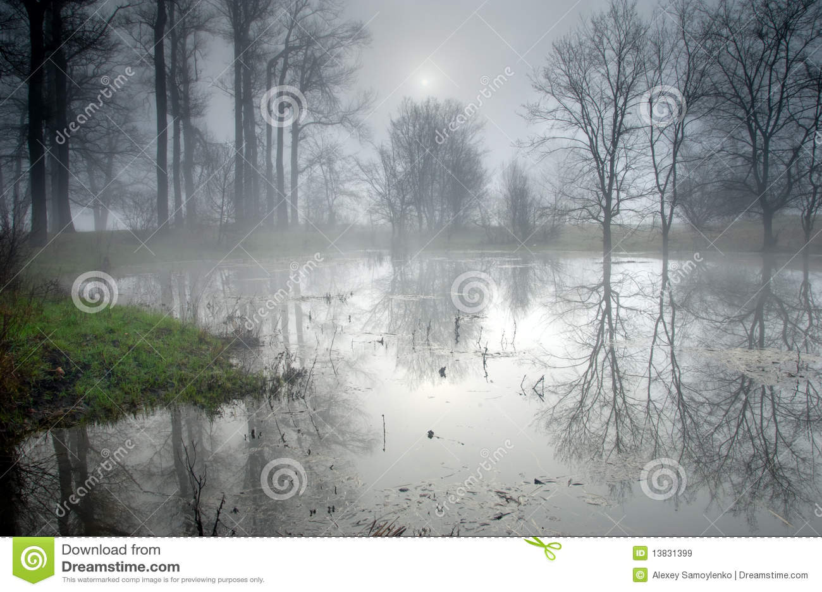 Geheimzinnig bos bij mistige ochtend