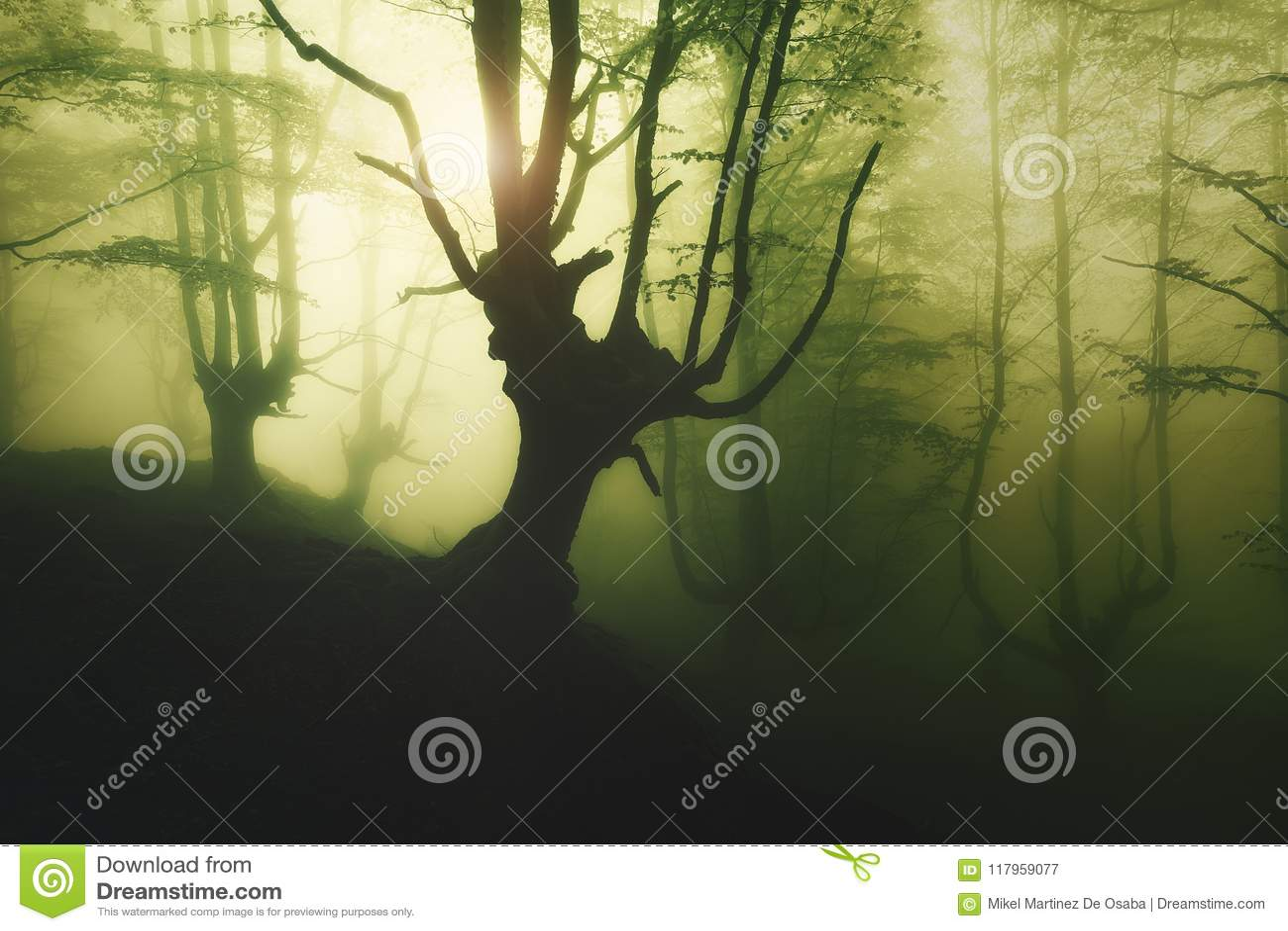 Geheimzinnig mistig bos bij de lente