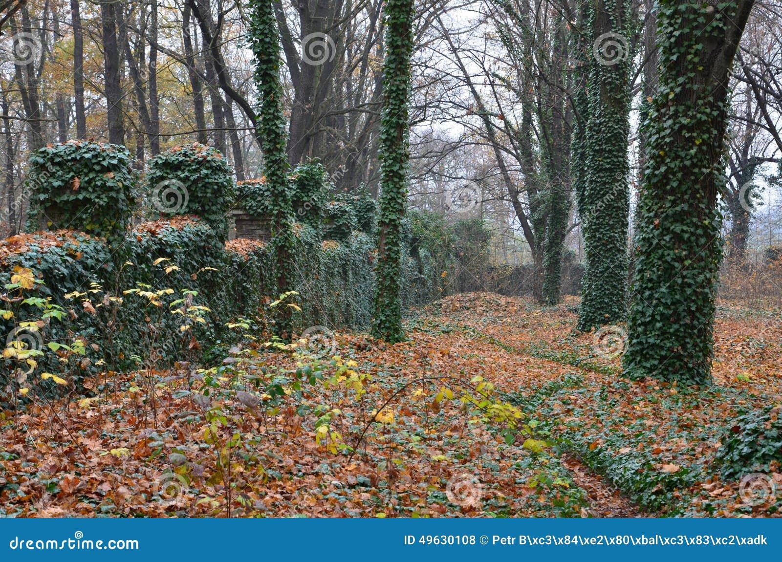 Geheimzinnige begraafplaats van dwazen met bomen