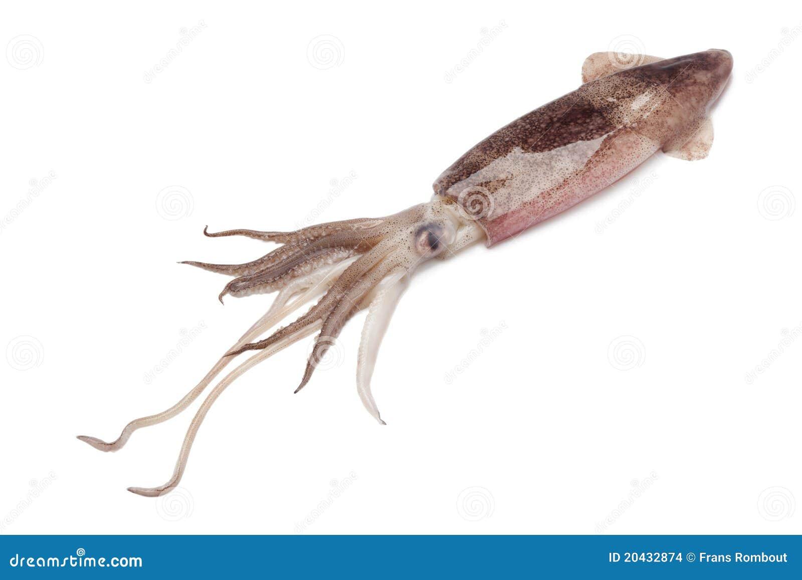 Gehele enige ruwe calamari