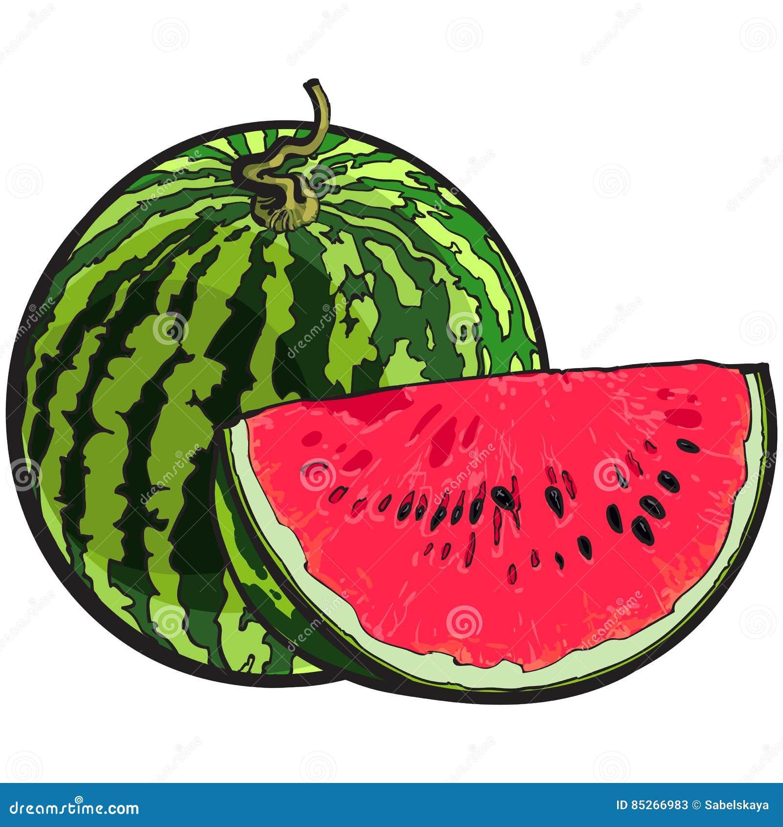 Gehele watermeloen en rode plak met zwarte zaden, schetsillustratie