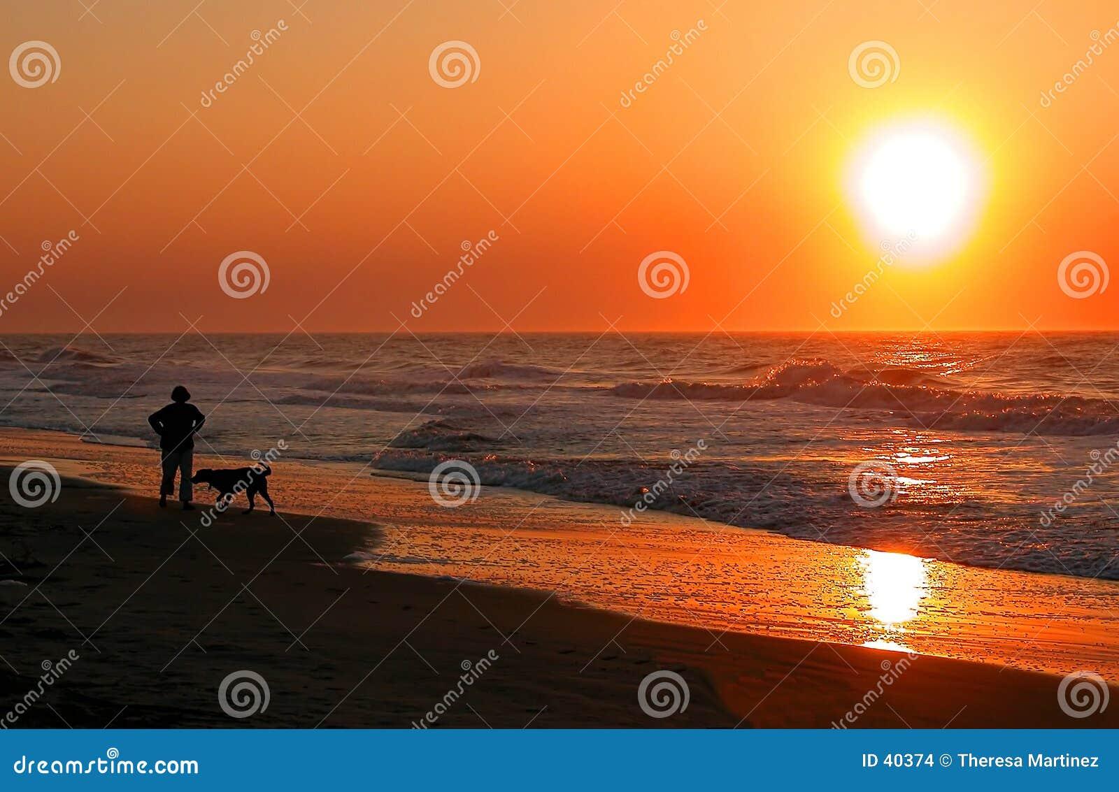 Gehen der Hund