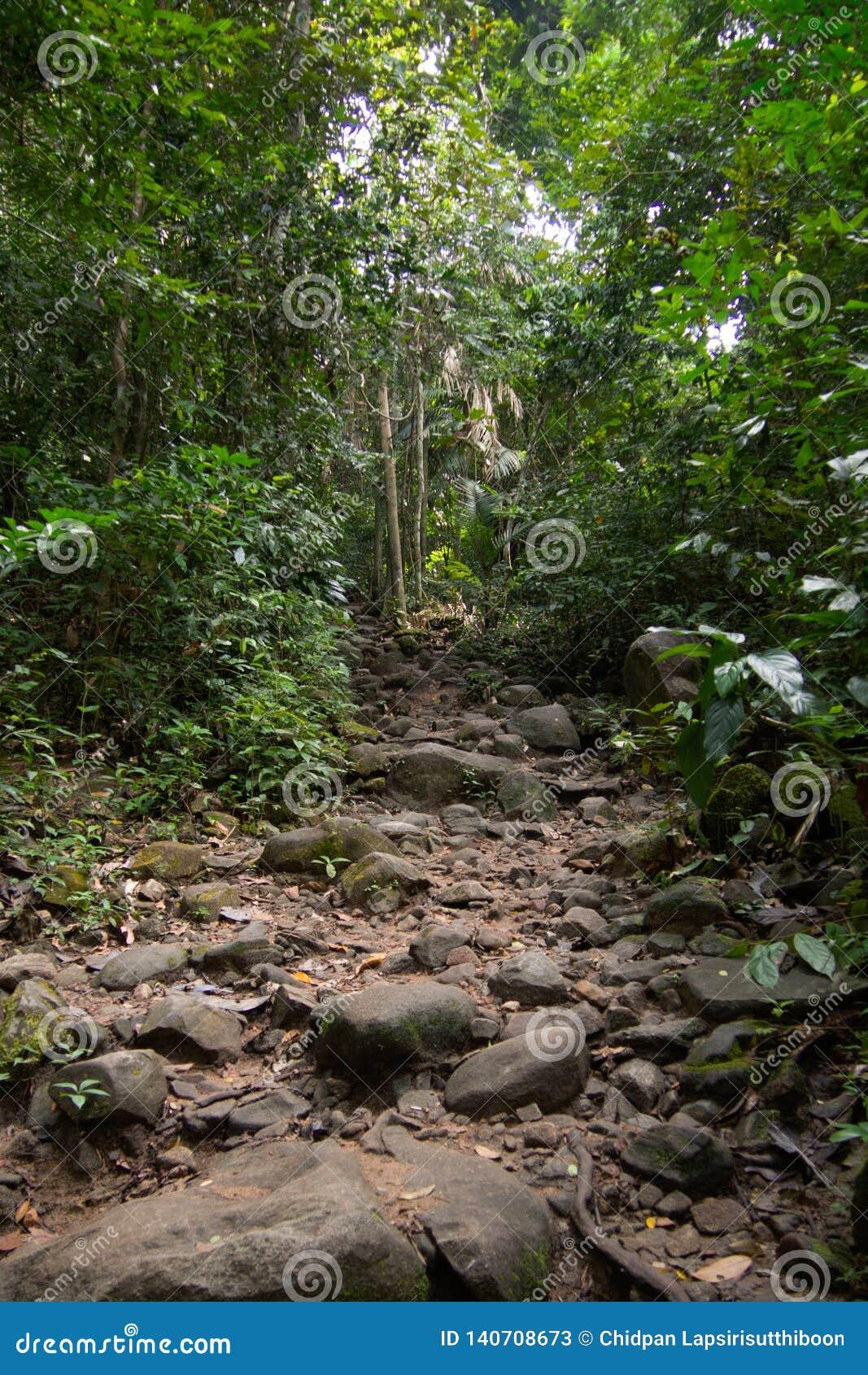 Gehende Spuren mit den kleinen und großen Felsen im grünen Wald