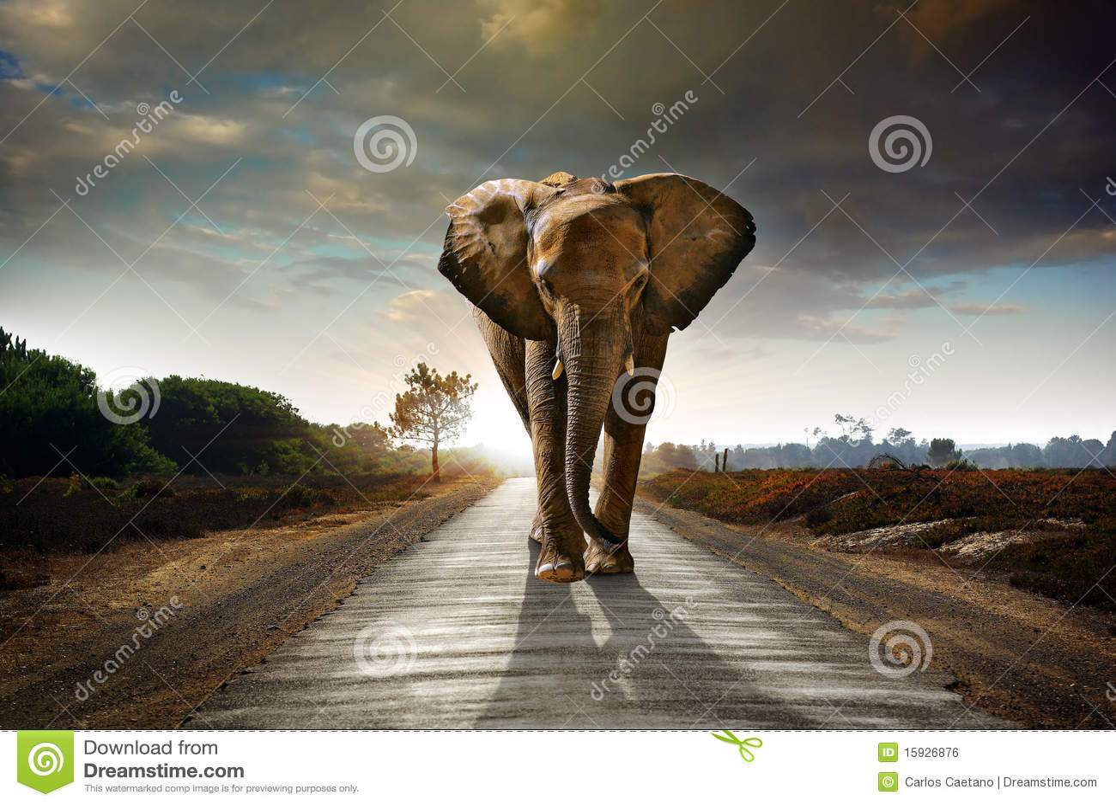 Gehender Elefant