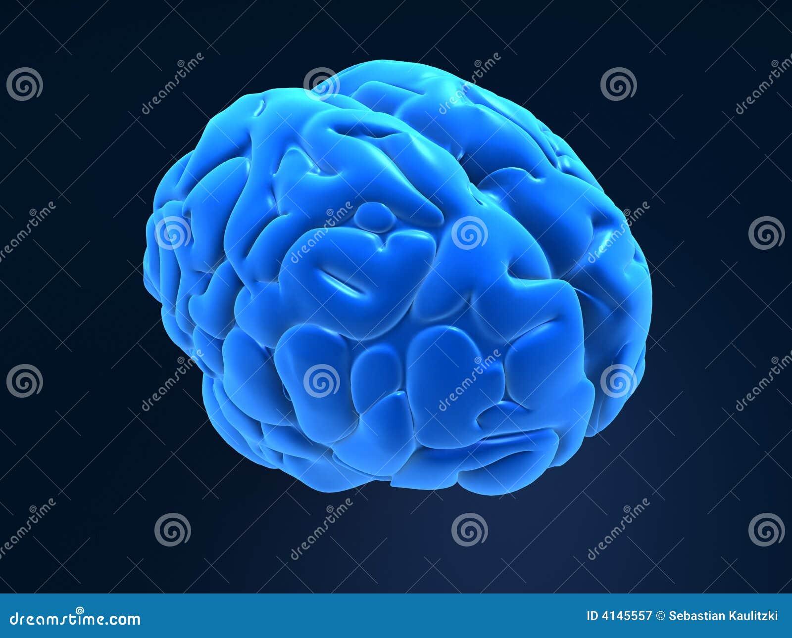 Gehirn 3d stock abbildung. Illustration von anatomie, medizin - 4145557