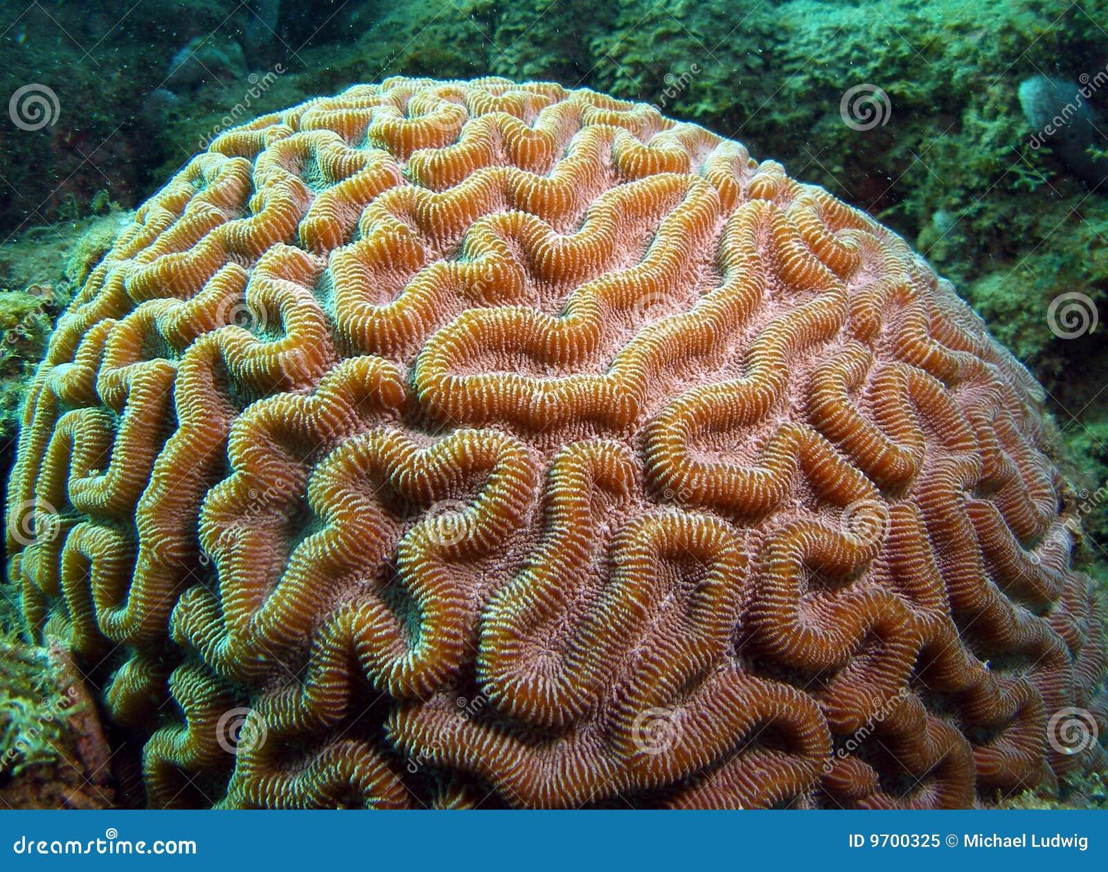 Niedlich Gerahmte Koralle Zeitgenössisch - Bilderrahmen Ideen ...