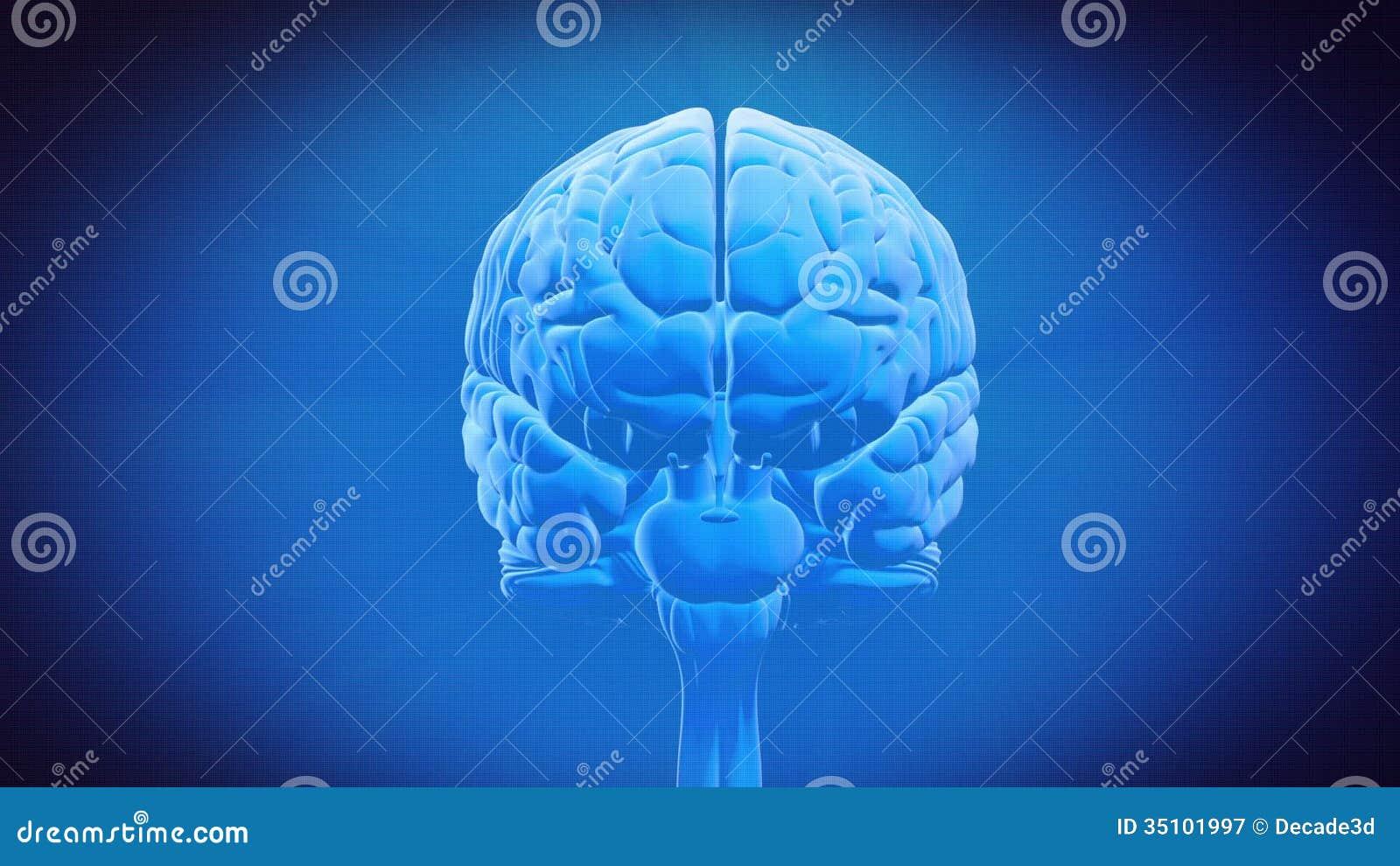 Großzügig Wo Ist Der Thalamus Im Gehirn Fotos - Anatomie Von ...