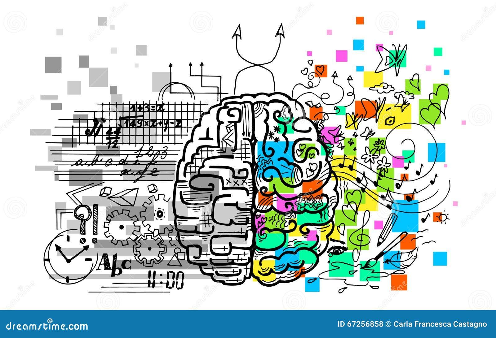 Gehirnhemisphären