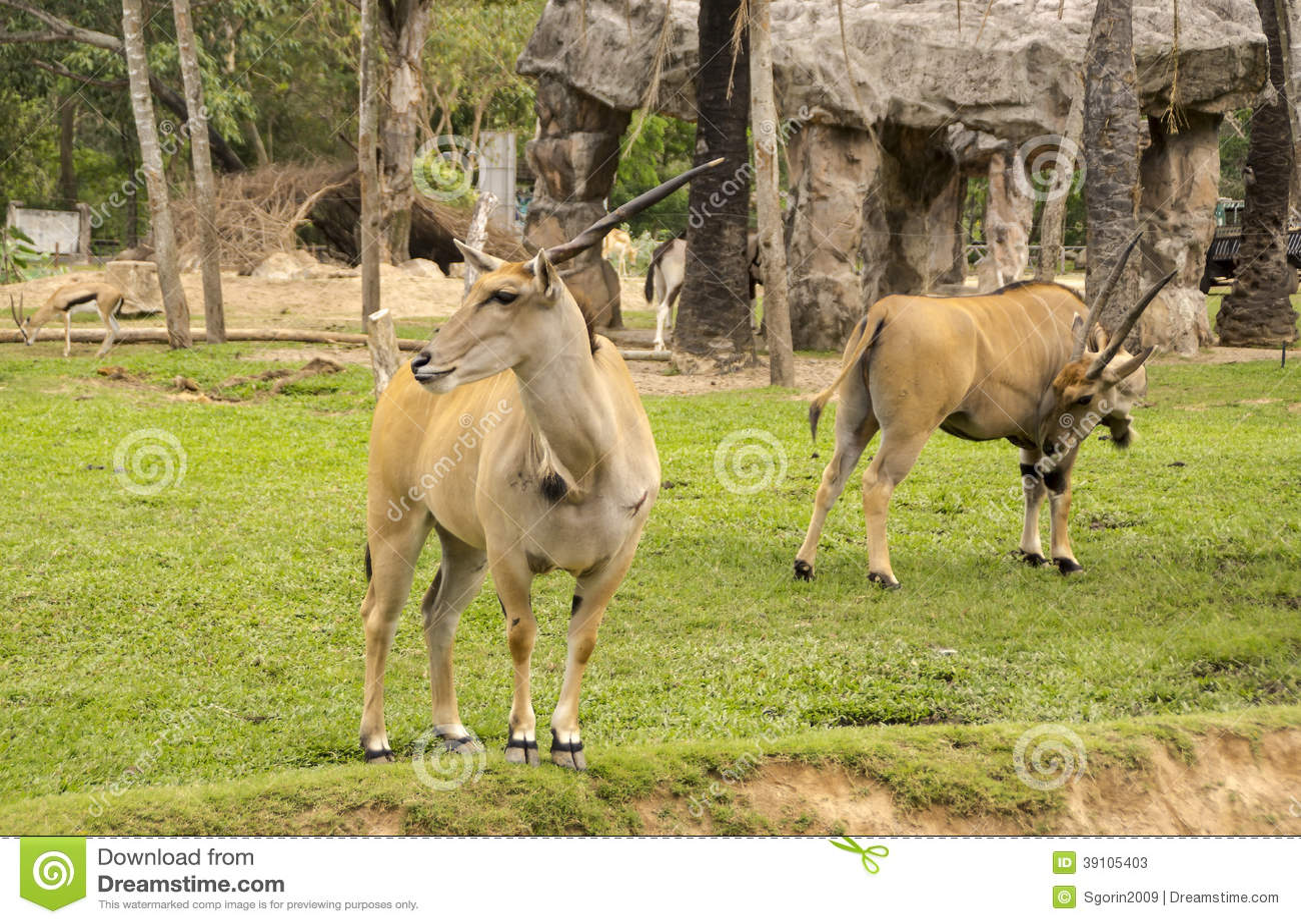 Gehoornde elandantilope in de dierentuin van Thailand