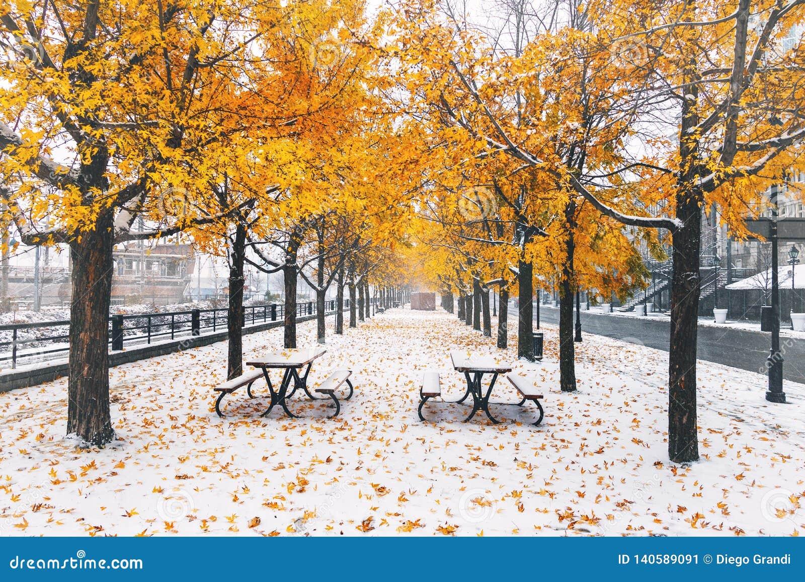 Gehweg auf dem ersten Schnee mit Gelb verlässt das Fallen von Bäumen - Montreal, Quebec, Kanada