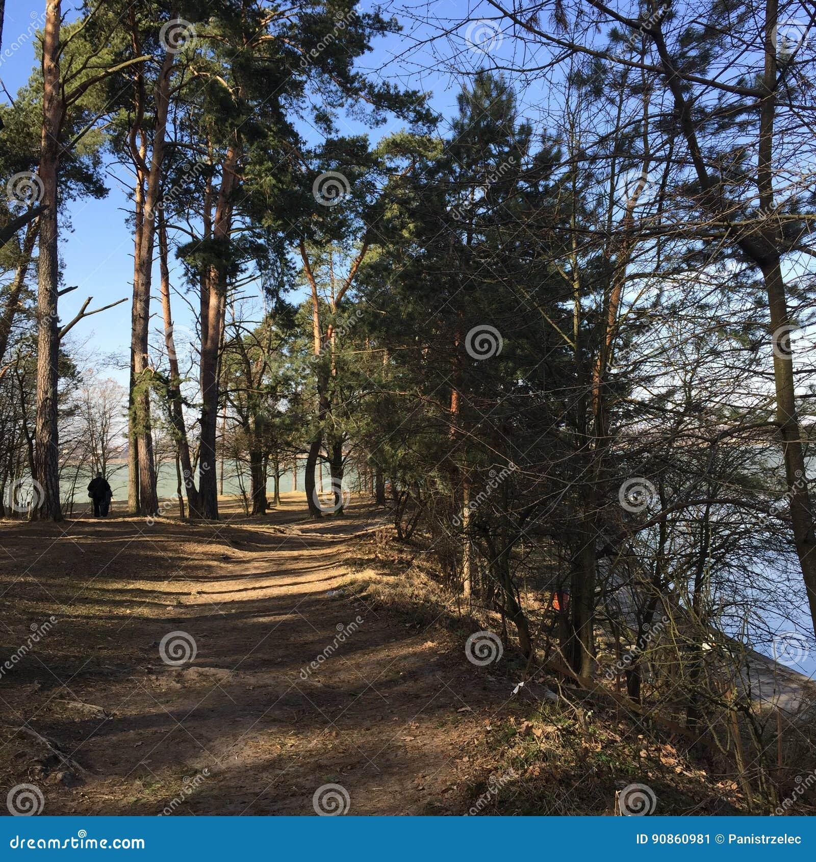 Gehweg im Holz