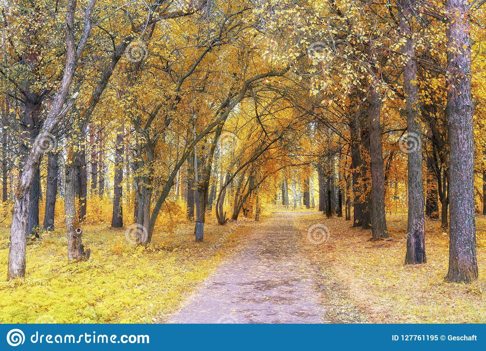 Gehweg-Weg durch schönen Fall-Wald im Park
